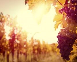 Mundo do Vinho