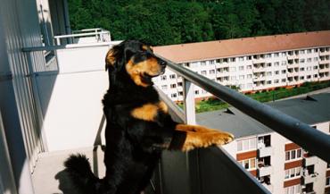 Bom para cachorro e para humanos